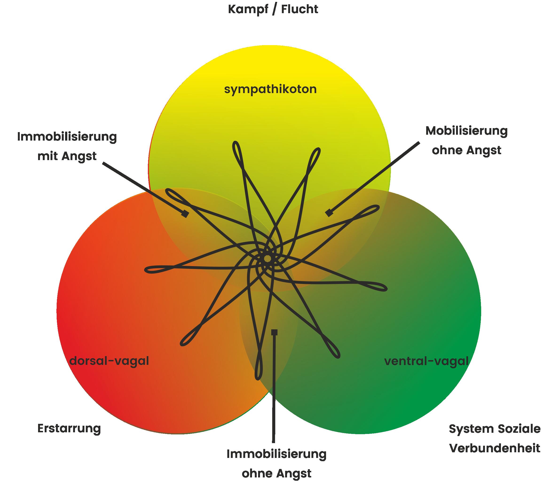 Wechselwirkungen im Autonomen Nervensystem